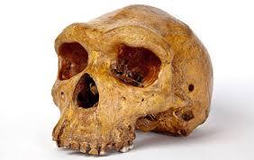 kabwe man skull