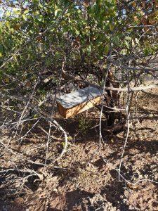 hive at Kawila school